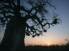 22 April 2012 - Underneath the Baobab Tree, Western Kruger, South Africa
