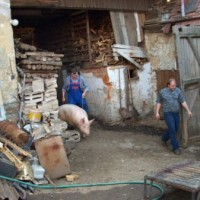 Read Zabíjačka! Braving a Pig-Killing Feast in Rural Czech Republic