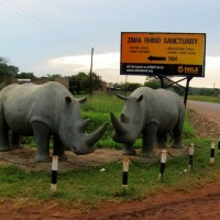 Read Every Rhinoceros Matters, Whether #JustOneRhino or Another