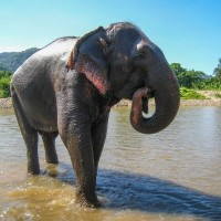 Read Asia's Elephant Tourism Problem: A Search for Answers