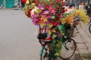 Read Bicycles in Vietnam: More than Simple Transport