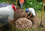 Read Seeking Positive Changes: Biodynamic Farm Internship at Finca Luna Nueva Lodge, Costa Rica