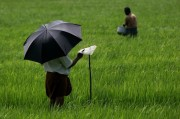 Read Photo of the Week: Rice Paddy Field in the Backwaters of Kerala, India