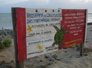In 2000, on just 5km of beach on Boa Vista Island, more than 1,000 nesting female turtles were tagged by researchers