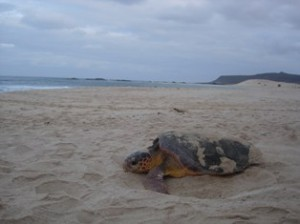Watching a nesting turtle is an unforgettable experience, especially at night
