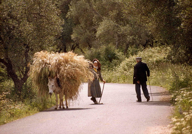 Corfu, Greece- country road scene