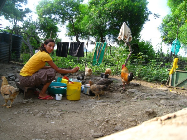 Washing the dishes in the Odula family's yard on Rusinga Island, Kenya, always attracts the attention of the chickens who eagerly scavenge for any tasty morsels that might fall their way!