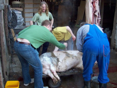 The author (bottom left) gets stuck into his new role as local butcher, scraping the hair from the freshly slaughtered pig at a zabíjačka in rural Czech Republic