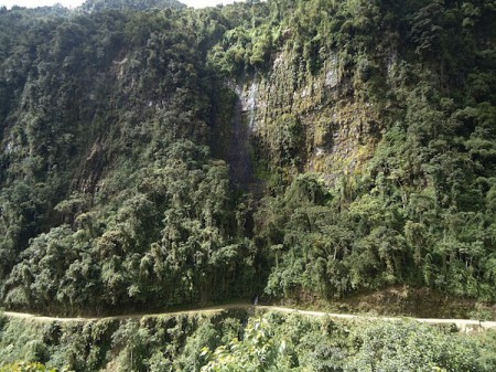 Thick vegetation on the World's Most Dangerous Road, Bolivia