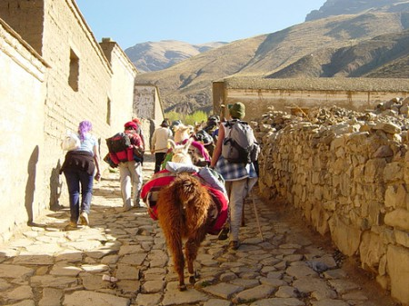 Llama trekking in Tilcara in the Jujuy Province of Northern Argentina