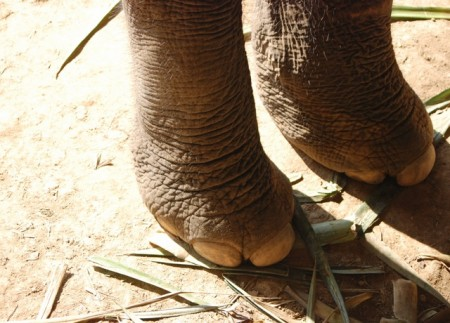 Laos_elephant_feet