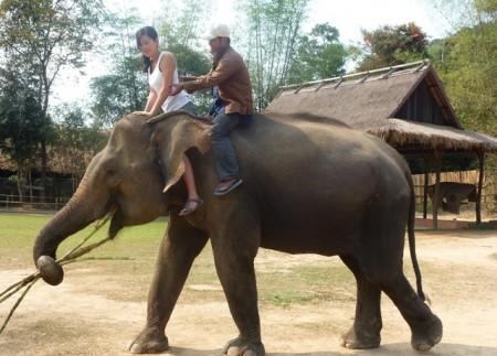 Laos elephant learning 450x323 From Logging to Tourism: A New Deal for Asian Elephants in Laos