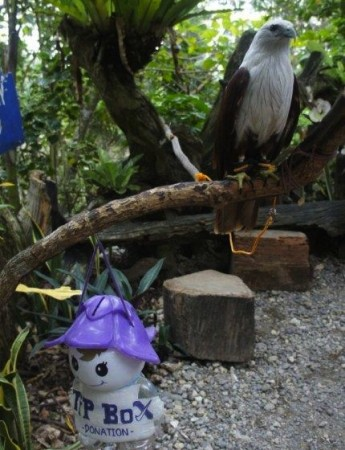 ecotourism opinion andre franchini eagle in Borocay Philippines 345x450 What is Tourisms Biggest Threat to the Environment?