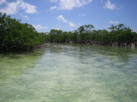 The mangroves of the Lagoon, San Salvador island, Bahamas