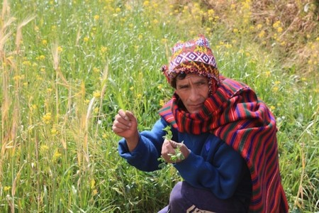 Chincheros farmer in the Sacred Valley of Peru