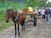 Mule carriage, Capurgana, Colombia