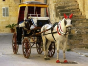 Horse-drawn \'karozzin\' carriage, Malta