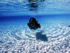 28 March 2010 - A glimpse beneath the azure waves of Tonga