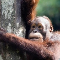 Read Can Ecotourism Help Save Endangered Species?
