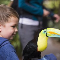 Read Ecotourism and Family Travel in Costa Rica