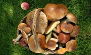 Read Photo of the Week: Yummy Penny Bun Mushrooms in Latvia