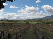 Read The Many Spheres of Heritage in the Cape Winelands of South Africa