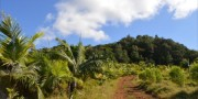 Read Birds, Trees and Wildlife: Ecotourism in Mauritius