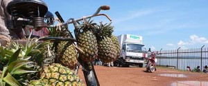 A bicycle laden with pineapples is parked at the Entebbe harbour on the shores of Lake Victoria (photo by Rob Brierley)