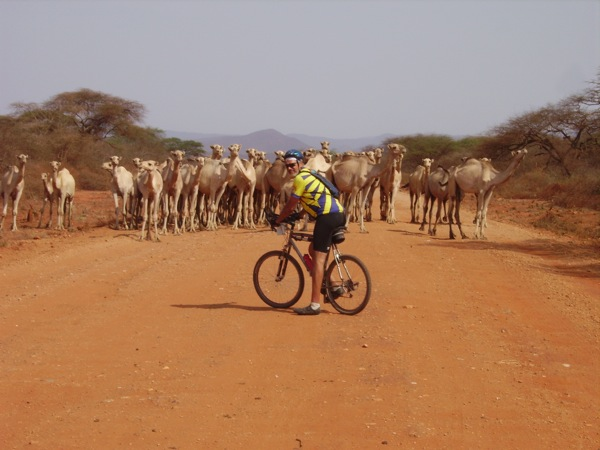 On the Tour d'Afrique, in northern Kenya, camels block the road (photo courtesy of Tour d'Afrique Ltd)