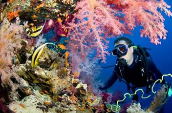 A Red Sea scuba diver revels in the spectacular colours and sea life of one of Sharm El-Sheikh's spectacular reefs