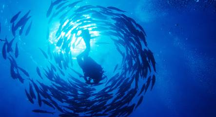 A scuba diver is haloed by a swirl of fish as he explores the depths of the Red Sea near Sharm El-Sheikh, Egypt