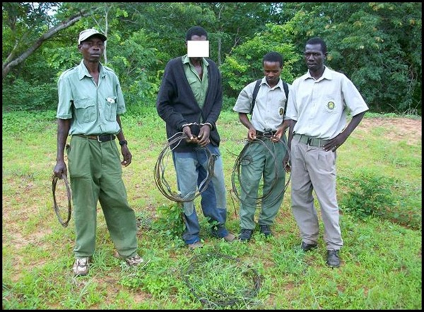 VFAPU scouts catch a poacher red-handed. The wire snares cause trapped animals inestimable suffering and result in a slow, agonising death.