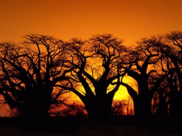 These baobab trees in the Kalahari Desert have long been great symbols of Botswana. The publication of Alexander McCall Smith's series of books featuring the super sleuth, Mma Precious Ramotswe, has provided yet another as a great boon for the local tourist industry.