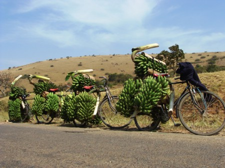 Six 'hands' or more are often seen being transported on a bicycle in Uganda