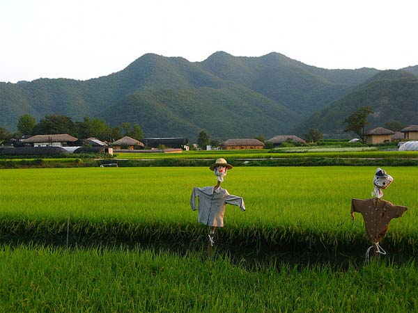 Photo of the Week (31 October 2010) - A Pair of Scarecrows, Seoul, Korea