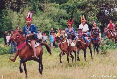Pasola horses and riders in Sumba, Indonesia