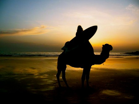 Yolanda Clatworthy combines the best of both worlds: camel riding and surfing on the southern coast of Morocco.