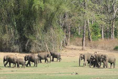 The area around the Kabini River is a popular site for elephant watching
