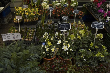 Flower Market at Christmas in Amsterdam, Netherlands