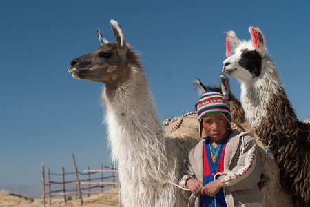 Lamas often accompany hikers on various hikes throughout Peru