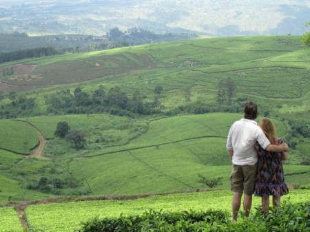 favorite landscapes- kate webb tea estates malawi