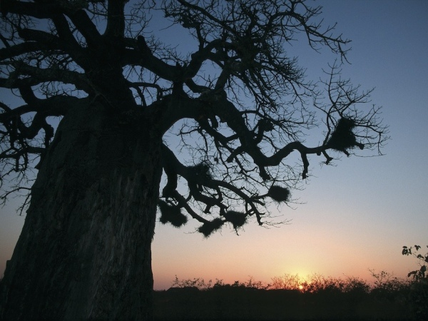 Photo of the Week (22 April 2012) - Under the Baobab, Western Kruger, South Africa