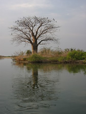 Sine Saloum River Delta, Senegal