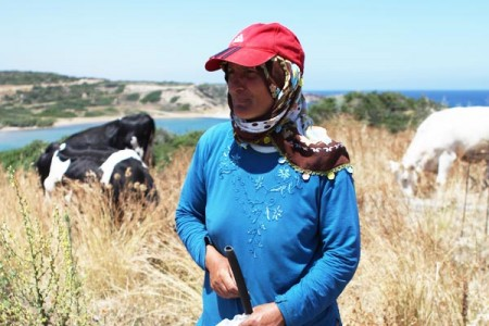 Agritourism North_Cyprus_Cattle_Herder