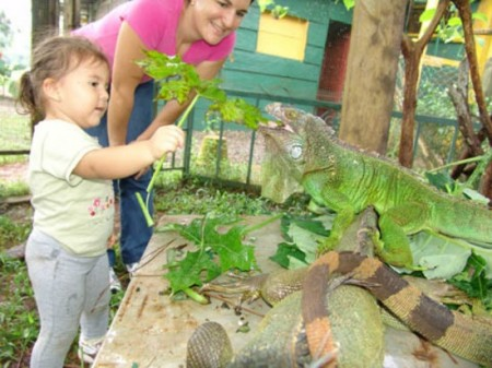 Agritourism Panama - plants and wildlife