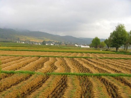 agritourism benefits - harvest in Lijiang China