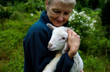 agritourism benefits - sheep cuddling