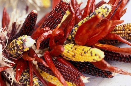 farmers markets - new mexico - corn