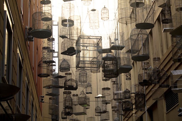 Empty birdcages hanging in Angel Place, Sydney, Australia