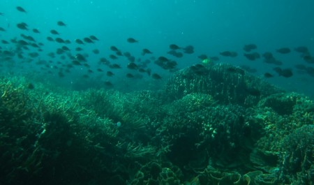 Fish on a reef of the Togean Islands, Indonesia